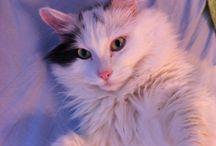 Martti / ihanin kissa <3