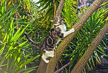 Katzen und Vögel | LigaVogelschutz / Katzen und Vögel. Eine unglückselige Geschichte. Viele Katzenbesitzer glauben immer noch, dass ihr geliebter Stubentiger sich nieeeemaaalssss an Vögeln vergreift, wenn er im Garten oder darüber hinaus herumschleicht.   Richtig ist, dass Katzen nicht daran Schuld sind, dass die Lebensräume unserer heimischen Vögel vernichtet wurden.   Unser Tipp: Bepflanzen Sie Ihren Garten mit dornigen Gehölzen, lassen Sie Ihre Katze nur unter Aufsicht und nicht während der Nestlingszeit in den Garten.