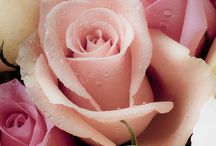 flower / aroma