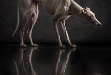 Doges ^^