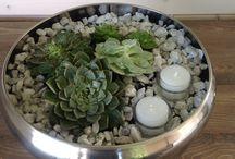 Planter / Terrarium
