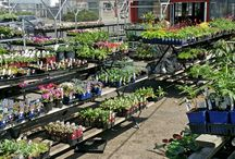 Pictures from the Nurseries 2015 / Pictures from the nurseries at each of our store during the 2015 season.