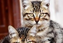 gatos e tigres animais
