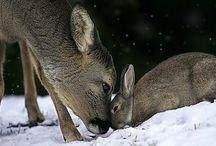 animals / by Elesa Fender Gray
