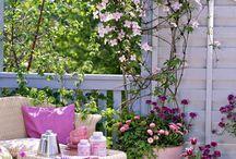Plantes terrasse