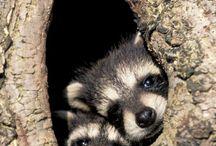 Cute Animal Photos / by MSU CVM