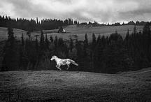 b/w photos / by Andreas Hirsch