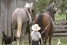 Horses / Horses used by Amish for work, travel, and play.