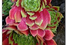 Gardening / by Judy C Clark