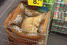 Dormir confort chats et chatons