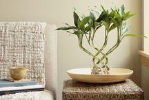 Plantas plantas plantas