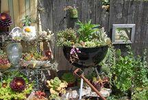 gardening / by Tamara Rutherford