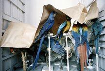 Aesthetics of Preserved Nature/Dioramas