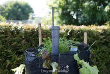 salatanbau mit schneckenschutz