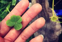 Finding Luck / Four leaf clovers