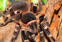 SKLÍPKANI / arachnidae