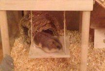 Hamster idéer ❤️