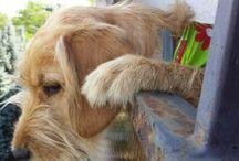 My Pracli dog