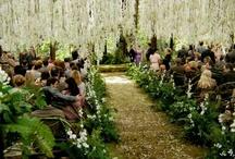 Wedding / by Emily Kennedy