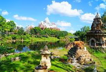 9 WDW Disney's Animal Kingdom