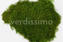Moss flat / Moss flat is one of the most relaxing green plant