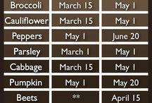 Calendari hort plantació