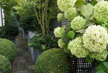 Ecrans visuels jardin contemporain