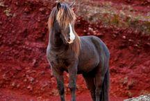 Pferde - wahre Schönheiten