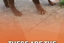 Dog Breeds Families Want In 2018 - YDD_Pinterest_108906 / Dog Breed 1