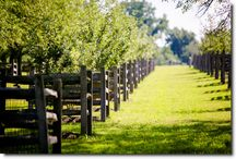 The Orchards / Pictures of The Orchards