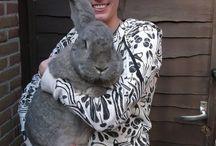 Rabbits / by Victoria Van der Gouw