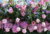 Flowerparade Rijnsburg 2014