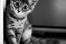 Fotos de mascotas