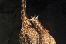 Zoológico Virtual  / Fotografias capturadas en momentos inesperados