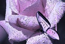 purple.. paars