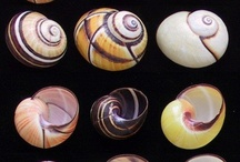 Snails and shells