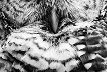 just owls / It just shows how amazing those hunters are. Most nocturnal with some exceptions.