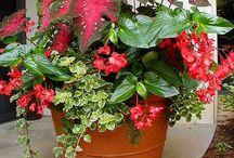 flower pots & baskets