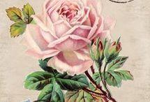 Ruusuja, rosor, roses