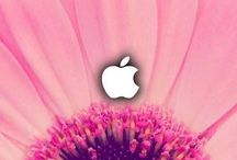 Flower iPhone Wallpapers