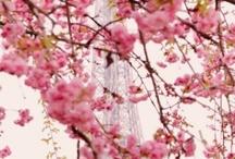 Pasta  de flores  do Japão