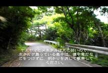 石垣島の動画コレクション / 南の島「石垣島」を写した動画です。 島の良さを堪能してください。