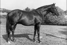 Nasrullah / Nasrullah line stallions, excepting those descending from Bold Ruler / by Rachel