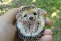 animalitos bebes♡♡☆☆