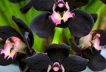Orquídeas / Flores
