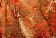 herfstplaatjes