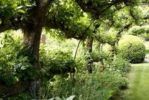 Green gardens / Gardens planted with green and a touch of white. Calming and relaxing