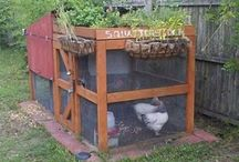 Backyard Farming / Advice and how-to guides on setting up and maintaining your own backyard farm. / by Andrew Thaler