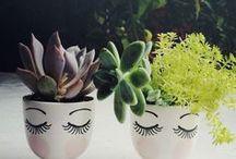 Plante de ghiveci