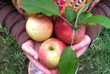 Celebrating the Seasons / by Angela Rae Hoppel